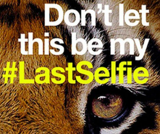 #LastSelfie : La campagne choc de WWF