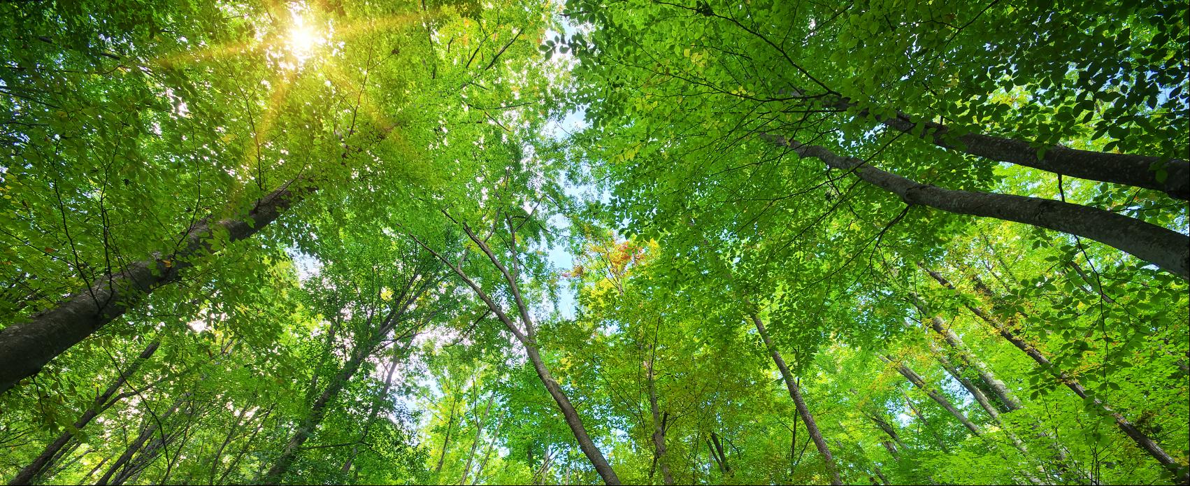 Transition écologique et Publicité